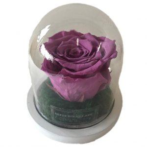 oud roze 1 gestabiliseerde roos witte voet