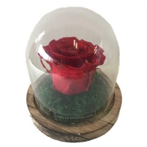 rood 1 gestabiliseerde roos bruine voet