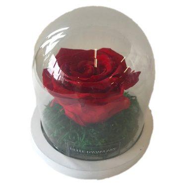 rood 1 gestabiliseerde roos witte voet