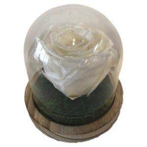 wit 1 gestabiliseerde roos bruine voet