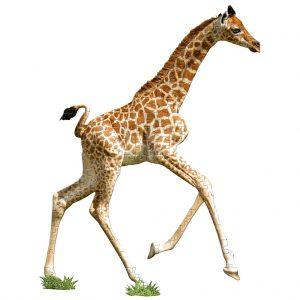 Madd Capp puzzel giraf (1)